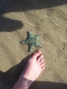 pie estrella de mar