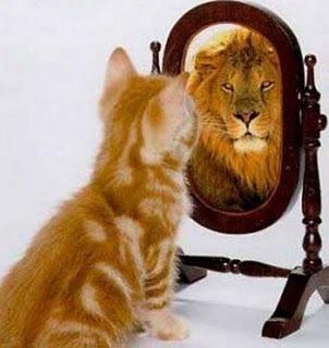 gato leon espejo