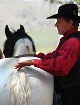 Horse-Animals-Gary-Raindrop