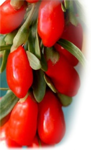ningxia-wolfberries-on-stem