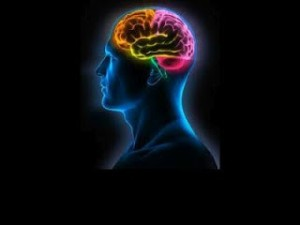 cerebro biodescodificacion