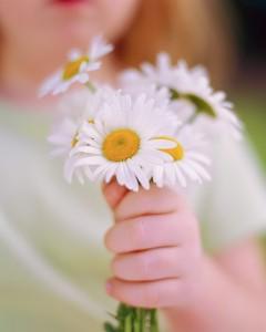 amor flores mano