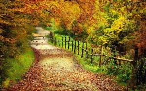 camino_por_el_bosque_en_la_estacion_de_oto_o_autumn_forest_rural_road