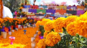 flores_de_cempasc3bachil_en_la_tradicic3b3n_mexicana