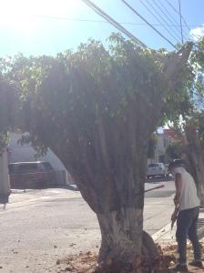 requiem a un árbol