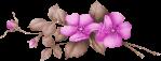 separador violetas
