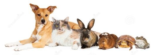 animales domesticos 1 perro gato conejo cuyo hamster tortuga