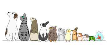 animales domesticos 10