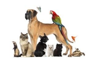 mascotas perro gato conejo perico pajaro