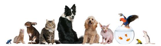 animales domesticos 8