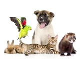 animales domesticos 9