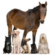 animalitos juntos caballo perro gato