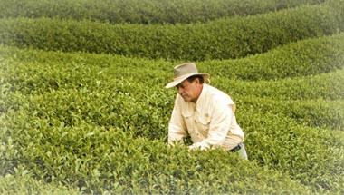 gary young campos cultivo