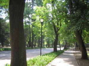 camino calle arboles lampara