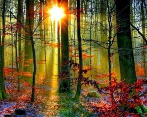 paisaje arboles bosque