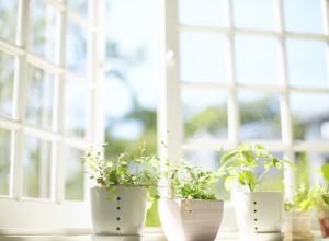 ventana plantas macetas aire luz