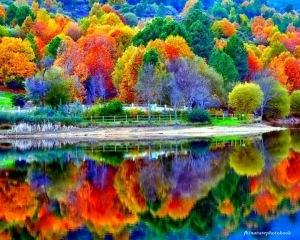 arboles colores lago agua