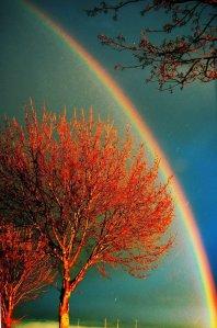 arco iris arbol
