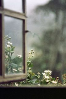 ventana flores lluvia