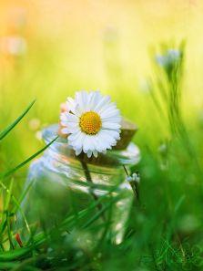 flor y aceite