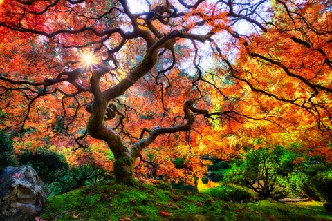 arboles-mas-bellos-y-hermosos-del-mundo-1