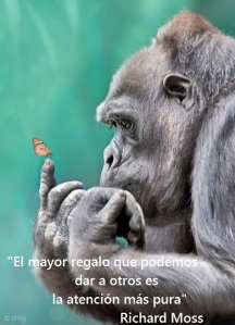 atencionmaspura orangutan mariposa